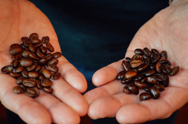 Starbucks beans on the left, our freshly roasted beans on the right.