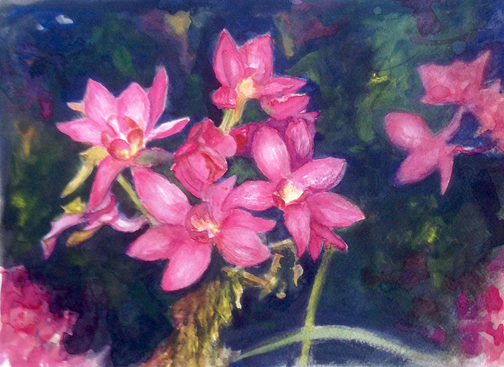 Red Orchids22.jpg