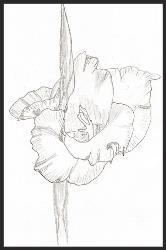 Drawing by: Pete Zuraw