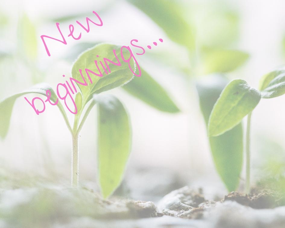 New beginnings....jpg