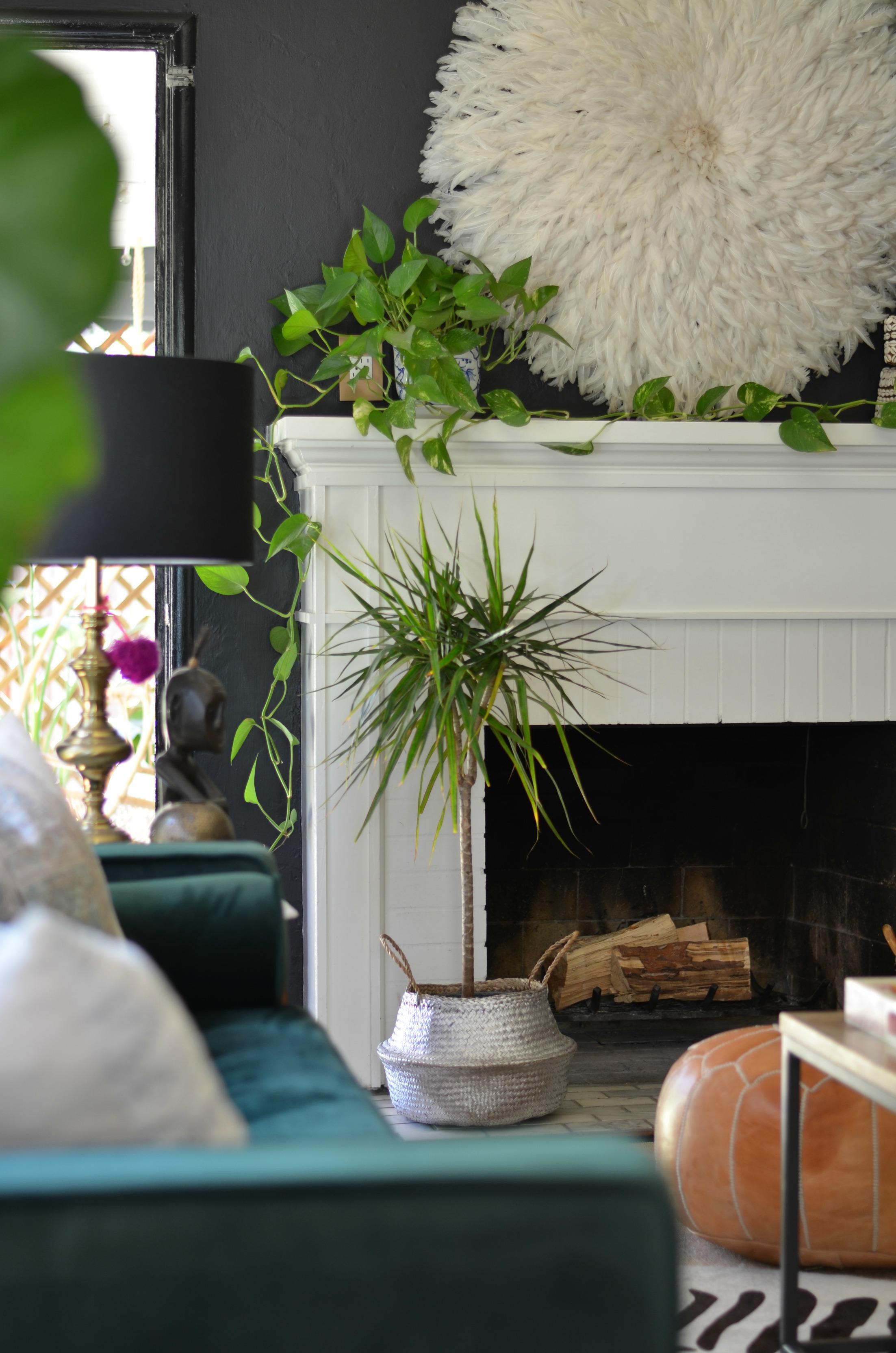 Shavonda Gardner on Styling with Plants