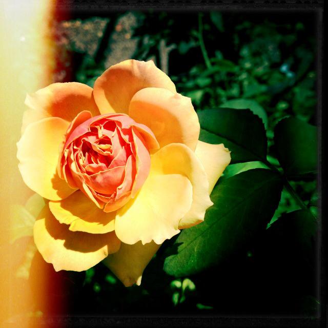 Rosemead