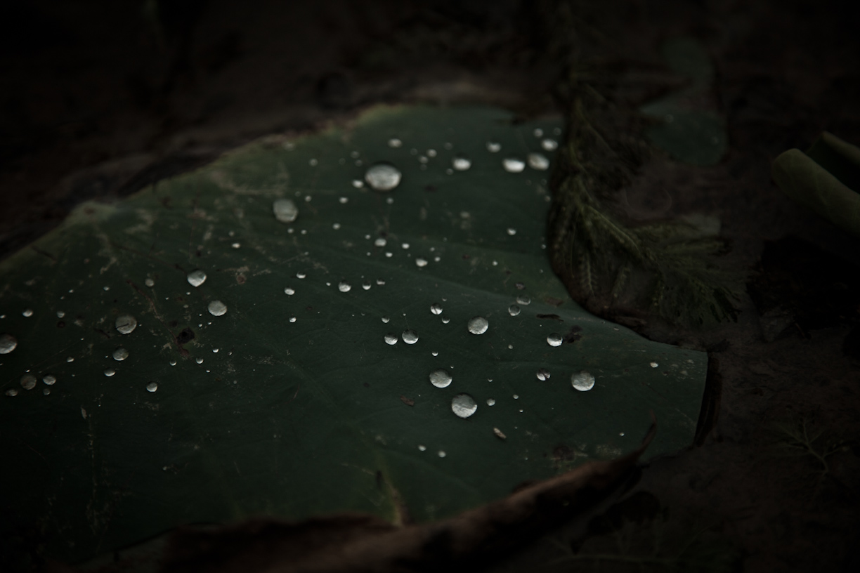 20140527-_MG_7344-Alice Carfrae-.jpg