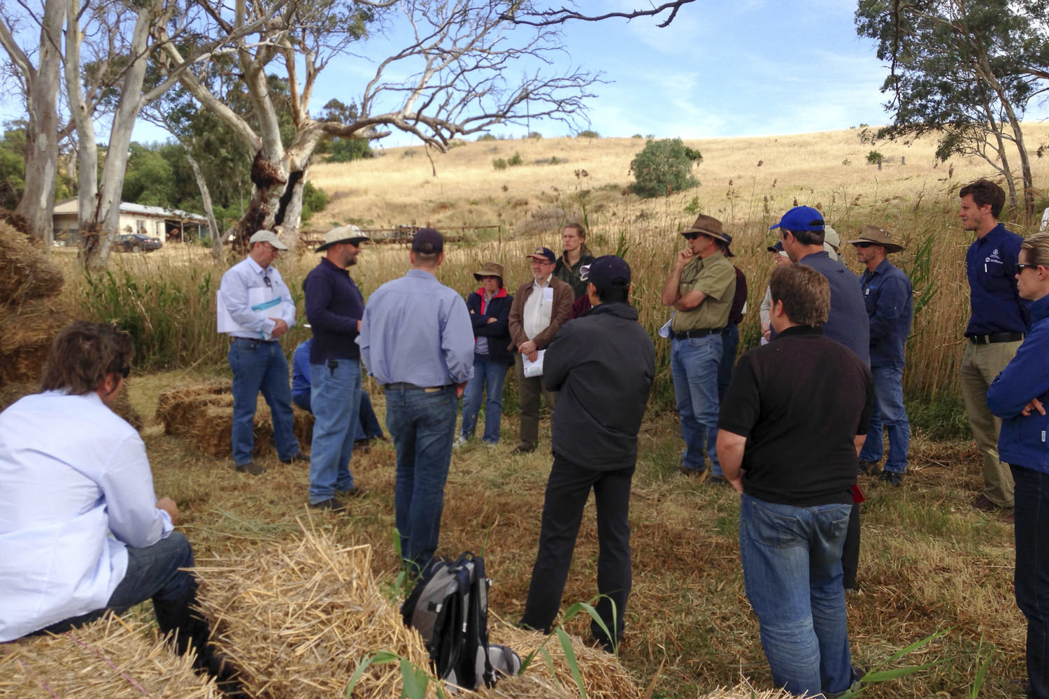 Photo – Far Left Wayne Brown (Environments by Design), next to him Greg Butler (SATNFA) & Russell Seaman (DEWNR) explaining the research trials at Mypolonga