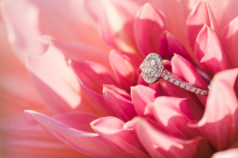 Ring Shot in Flower Photo