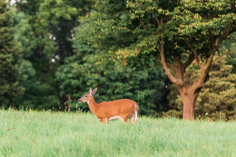 Deer in World's End