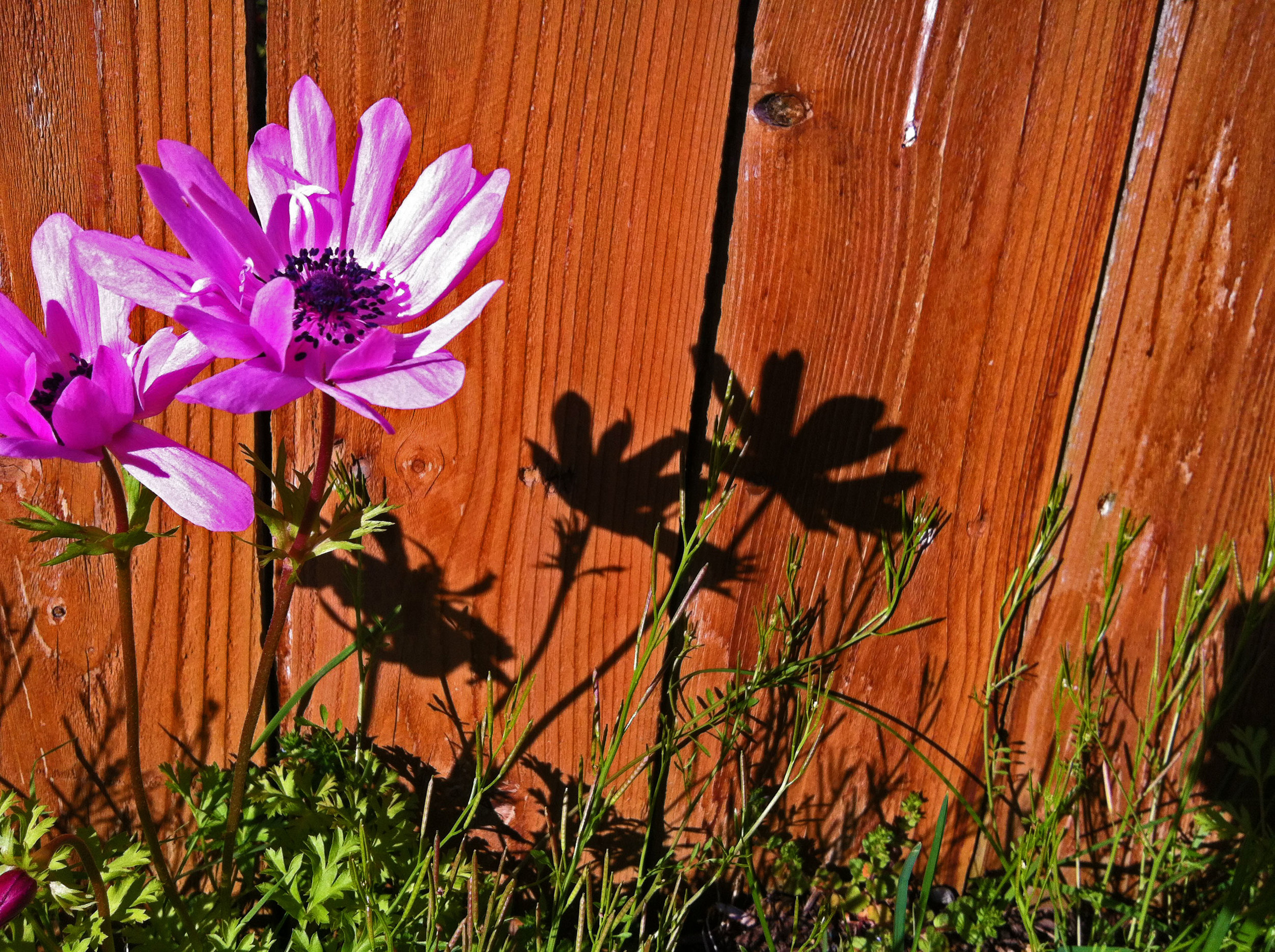 Flower-shadow.jpg