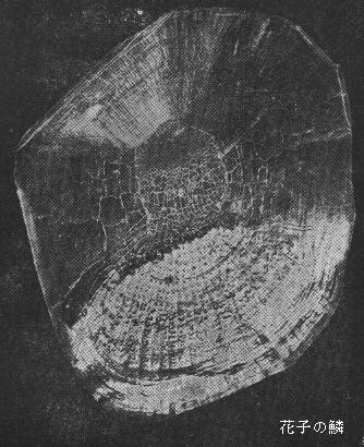 """Scale of Hanako"", by Dr. Komei Koshihara.  JNPA ."