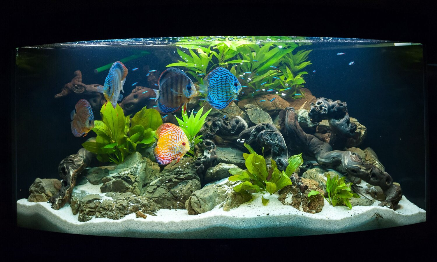 How To Set Up A Freshwater Aquarium Step By Step Fish Laboratory