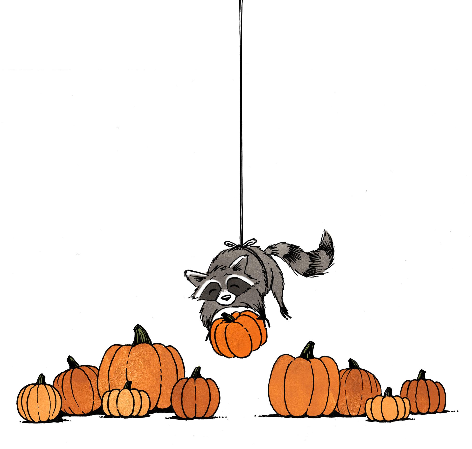 P1 Raccoon.jpg