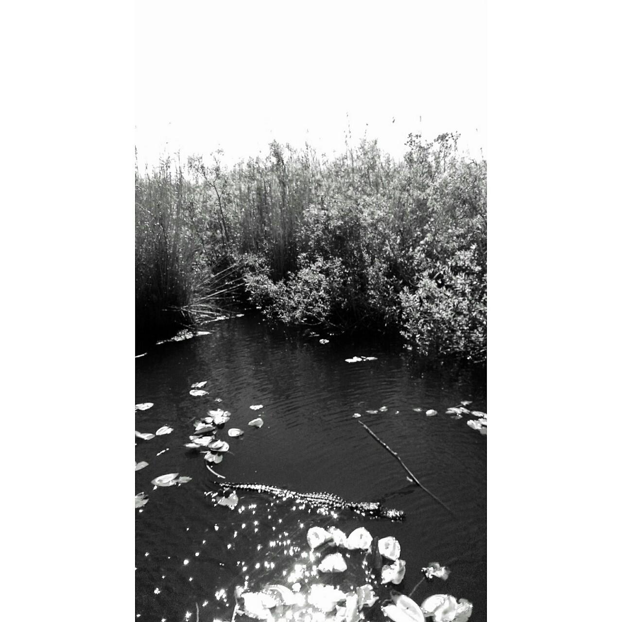 Everglades National Reserve Homestead, FL