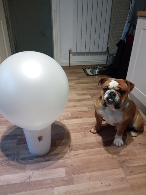 1. Get massive balloon