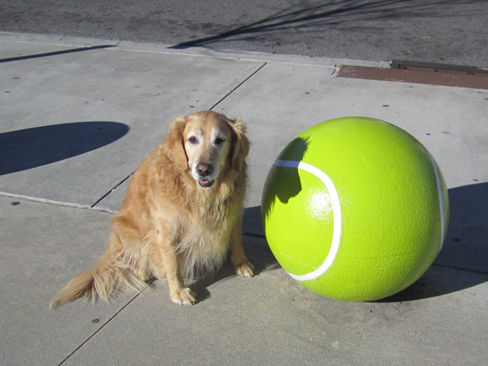Some dog with a massive not football.