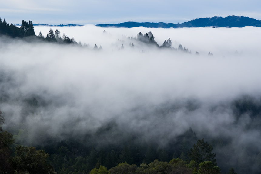 armstrong_redwoods-4