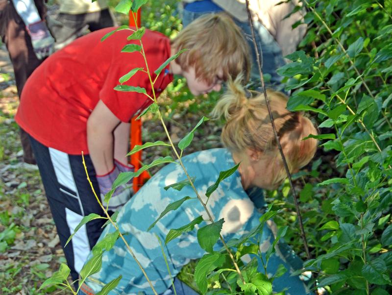 young volunteers.jpg