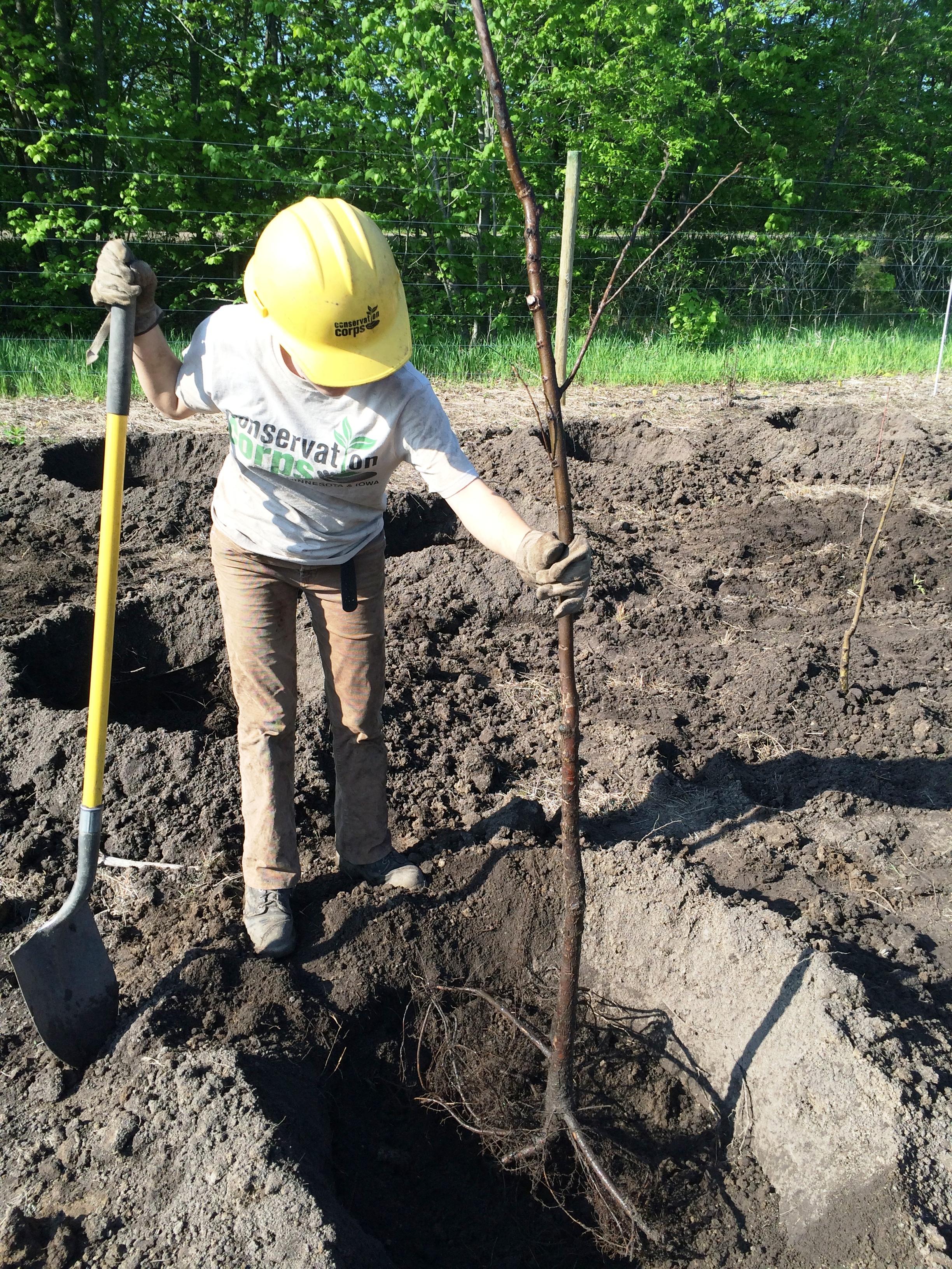 planting2.JPG