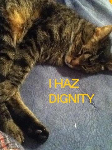 Dignified CAt.jpg
