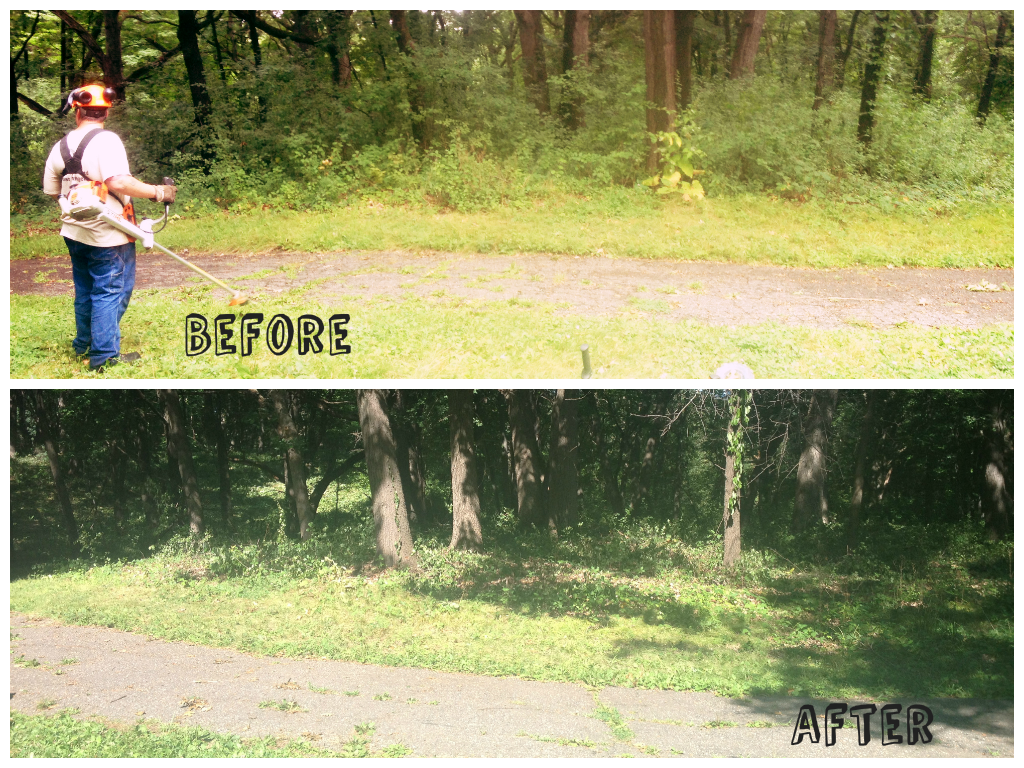 Young adult work day of buckthorn clearing before and after photos.