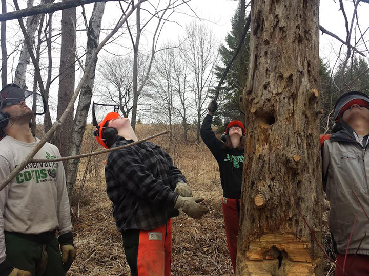 The Metro Roving crew decides where the tree will fall.