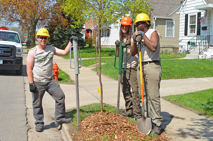 Conservation Corps field crew members planted boulevard trees during the 2015Community Tree Planting in Rochester, Minn.