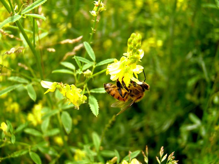 Photo:wadesbees.wordpress.com