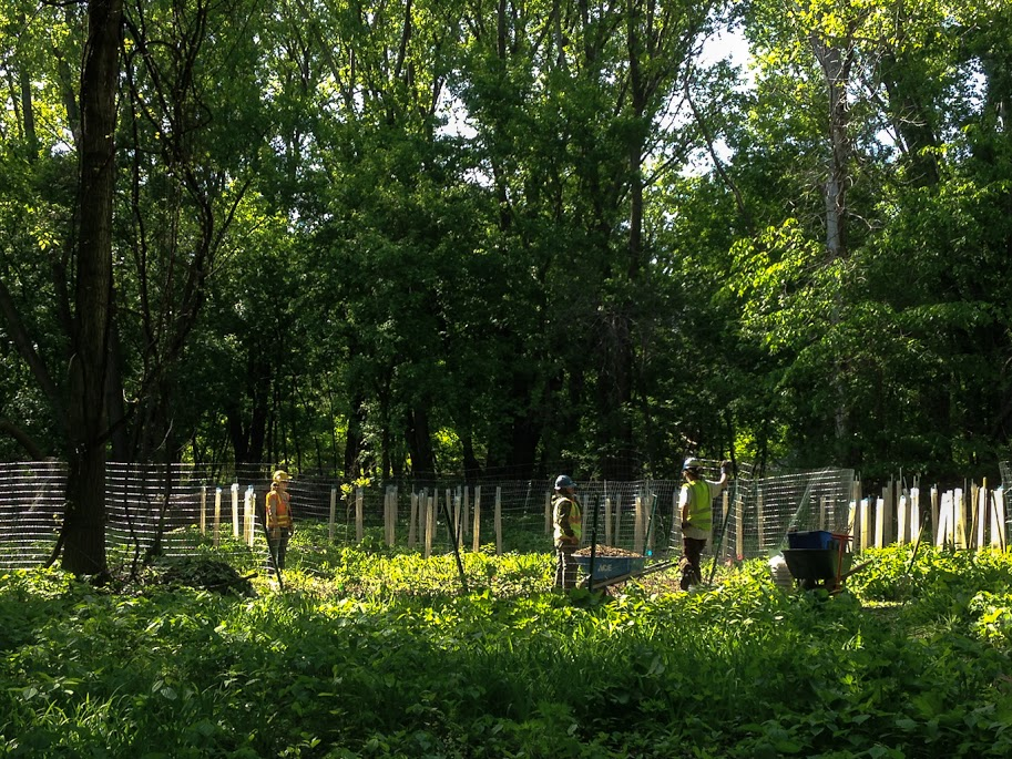 cottonwood project.jpg