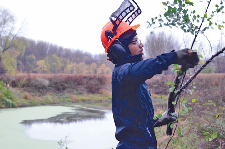 Corps member Anthony Wright removed buckthorn at Wood Lake Nature Center.(Photo courtesy Sun Current)