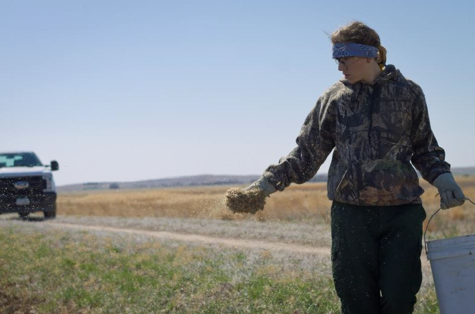 Sarah distributes seed along the dike adjacent to a previously burned unit