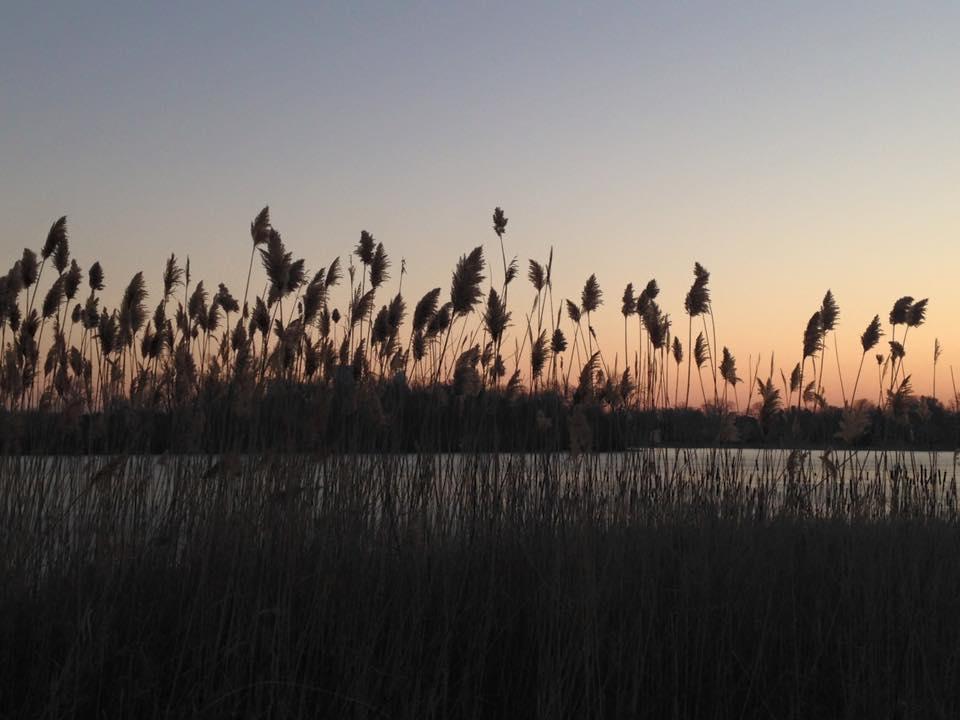 Lake of the Isles.jpg