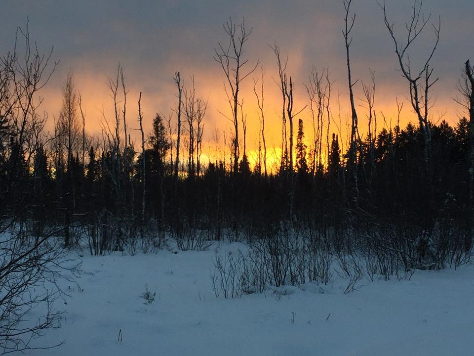 North Woods.jpg