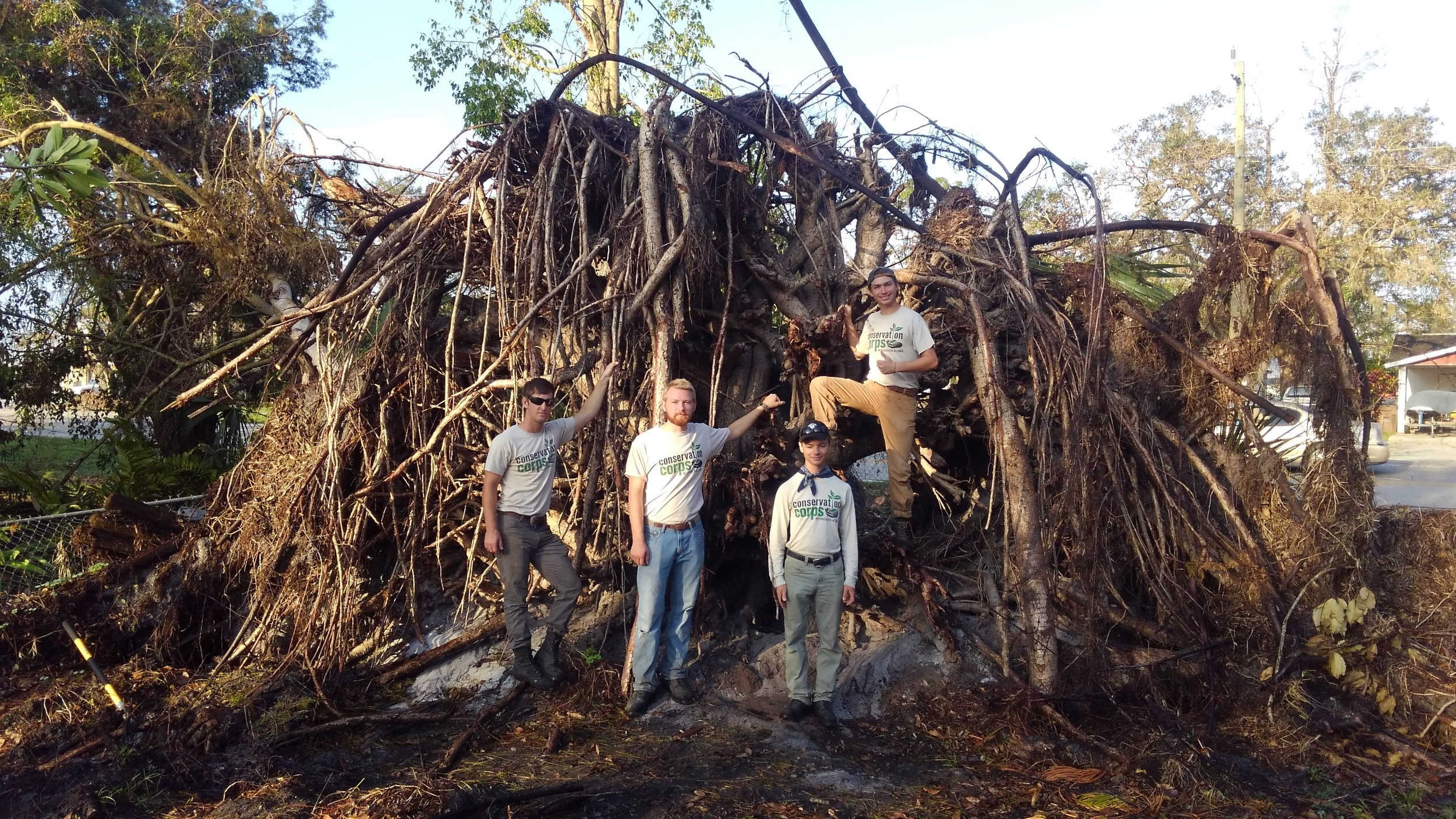 NW district ottertail crew- storm damaged trees.JPG