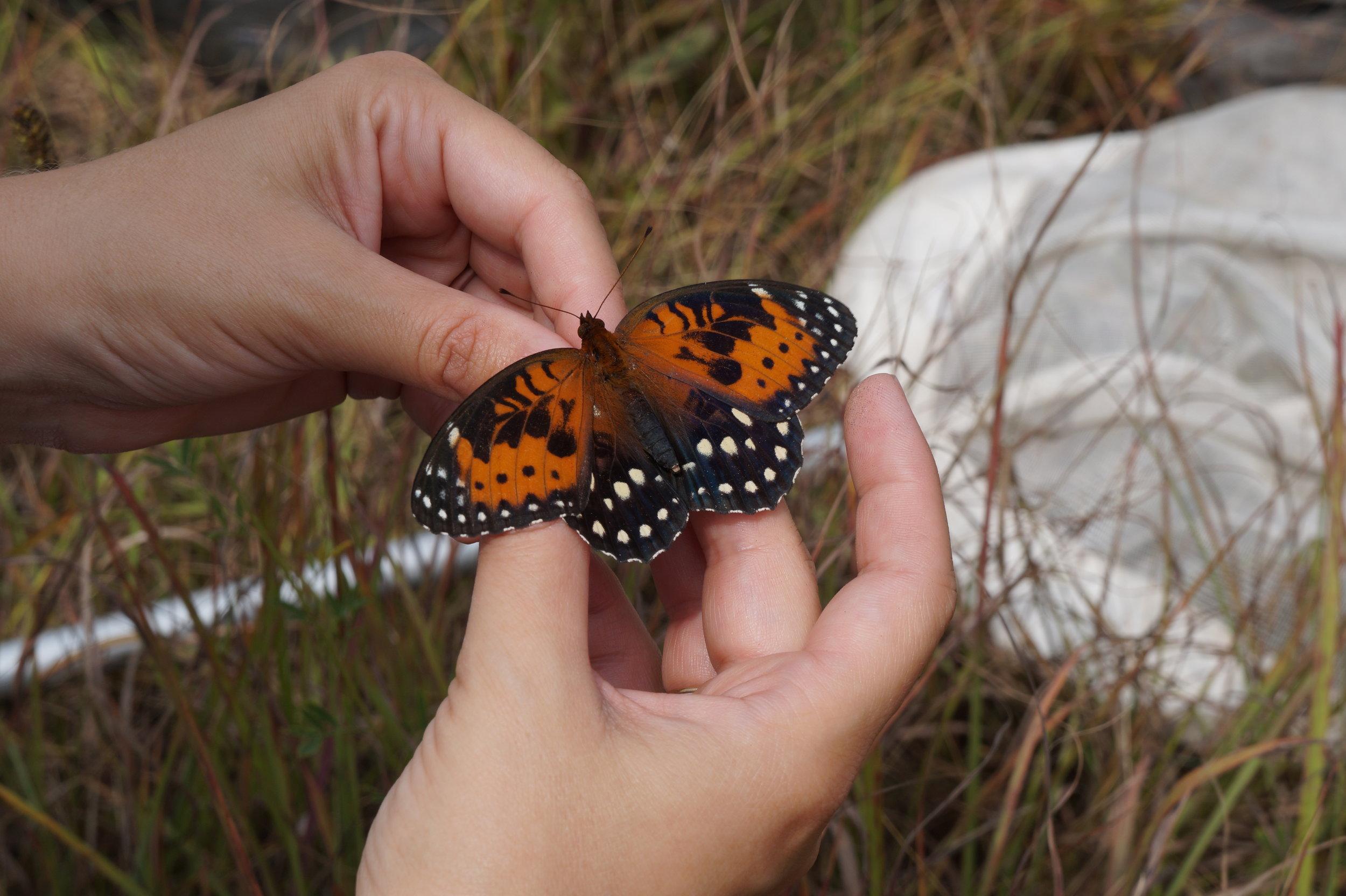 Butterfly_18.JPG
