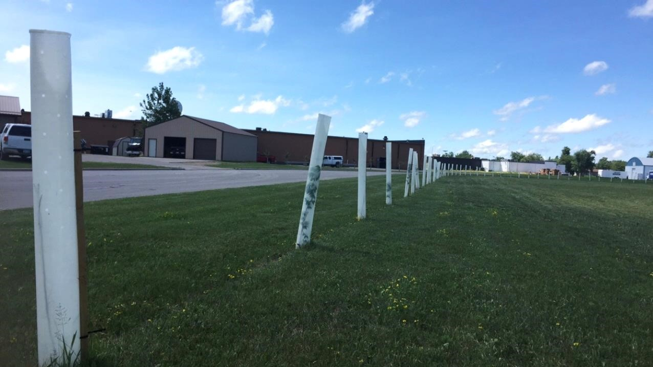 A new row of tubed trees at the Pennington SWCD Office.