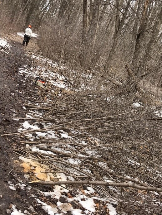 Buckthorn piled along a park trail in Crystal, MN.