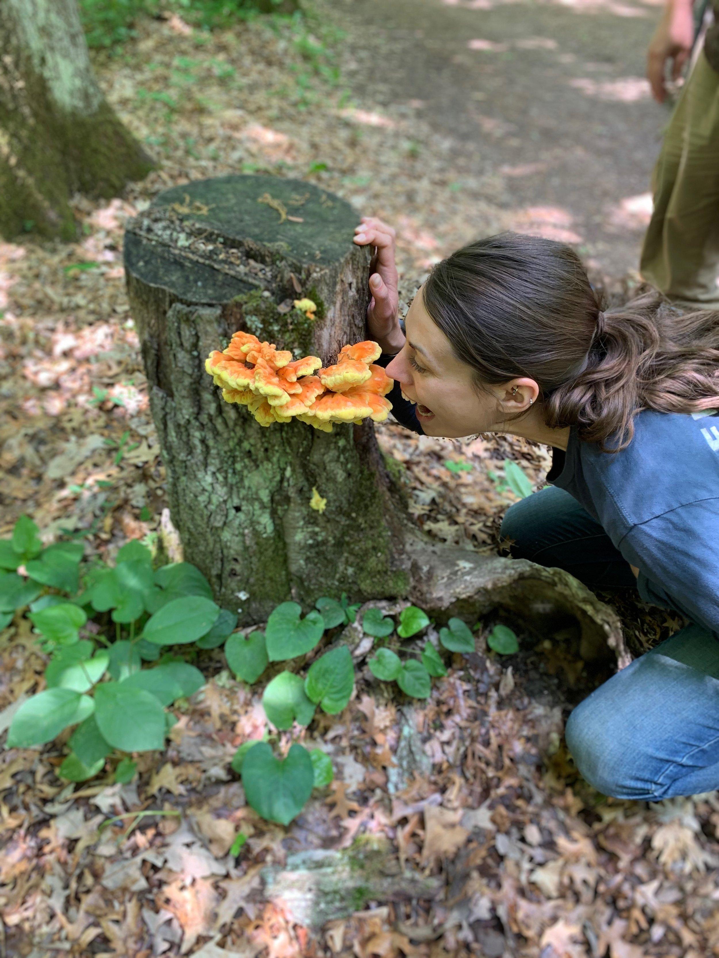 chicken of the woods stump 2.JPG