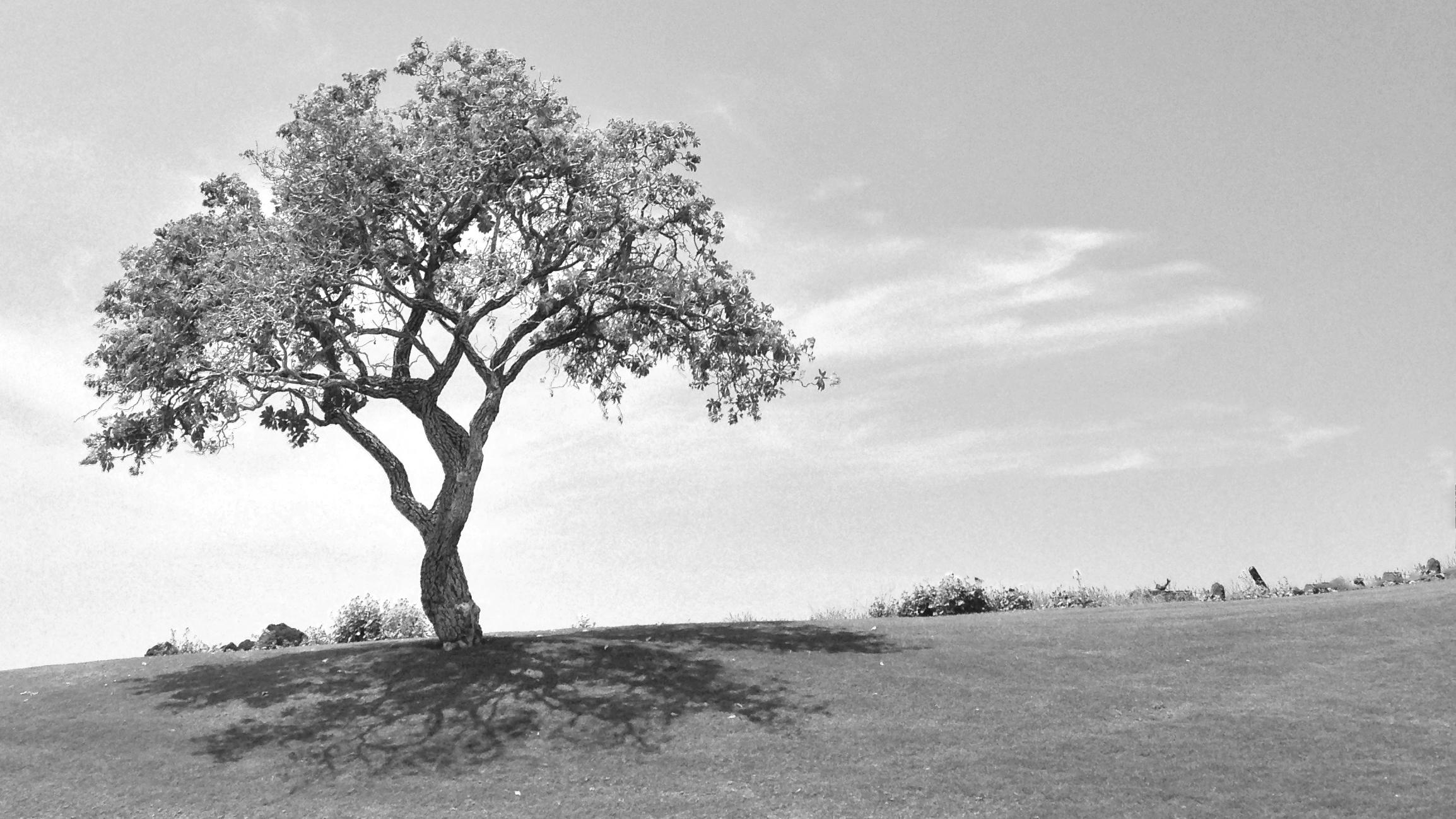 Alone Tree.jpg