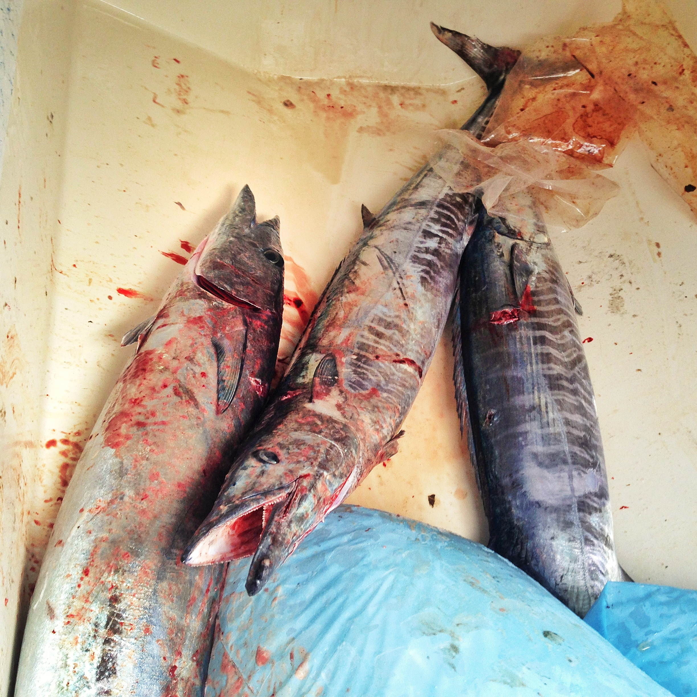 FishingOno.jpg
