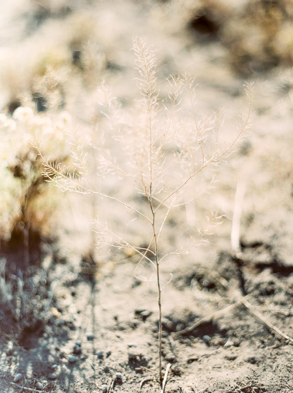 Brian Whitt Photography-Earrth-0001-2.jpg