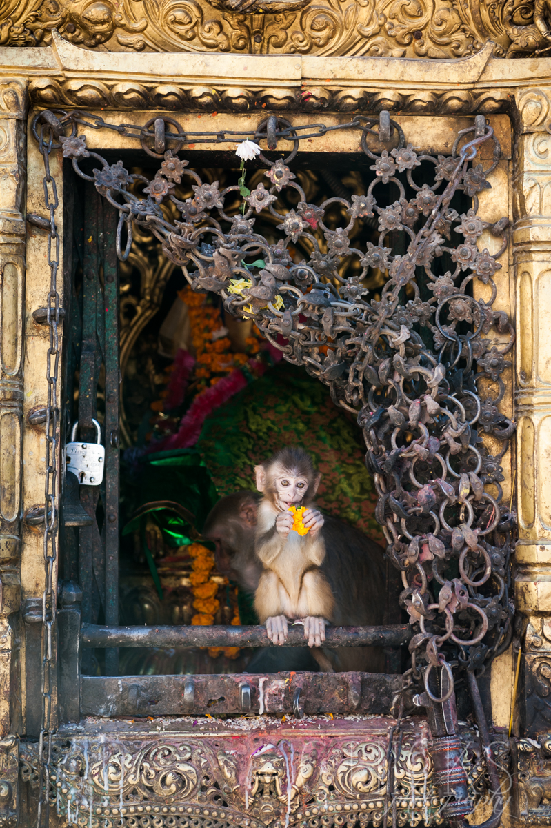 Kathmandu-16Nov13-136©chicksphoto.jpg