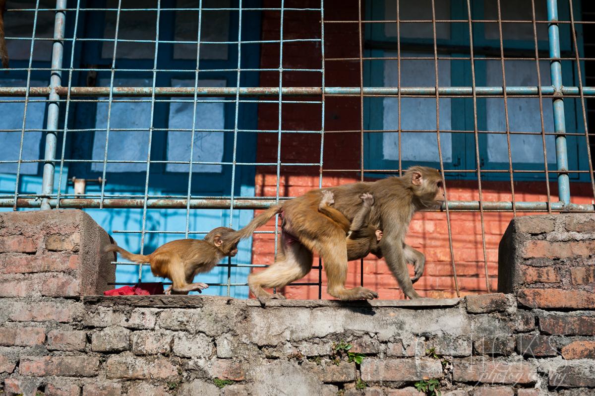 Kathmandu-16Nov13-217©chicksphoto.jpg