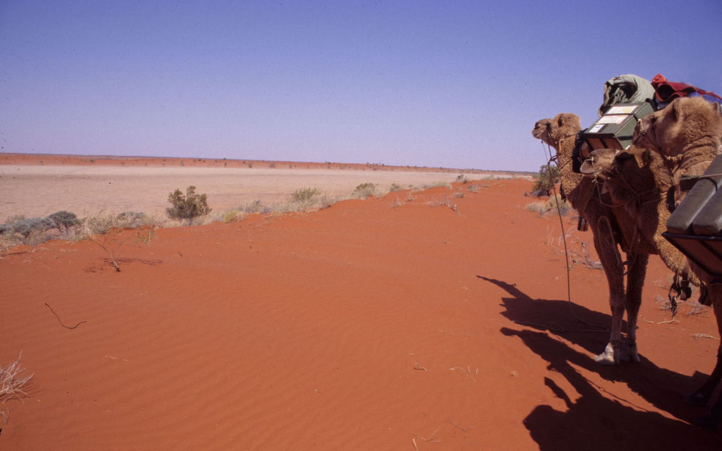 The dry Simpson Desert.