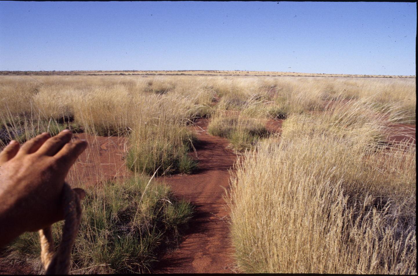The way ahead, Gibson Desert, WA.