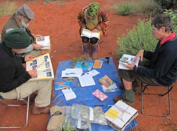 Collating botanical specimens, Simpson Desert National Park Survey, 2010.