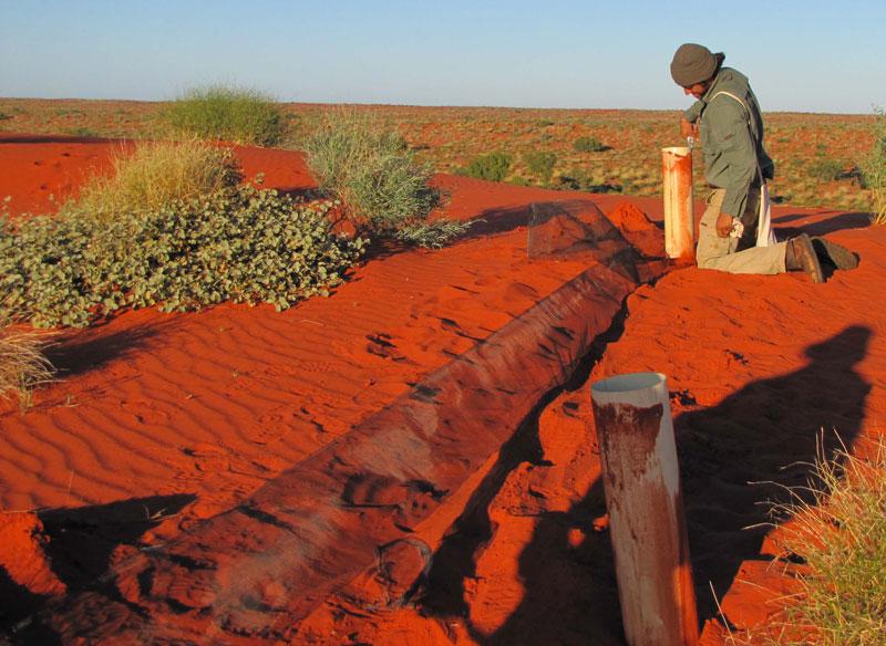 Sydney University ecologist George Madani, inspects pitfall traps, 2010.