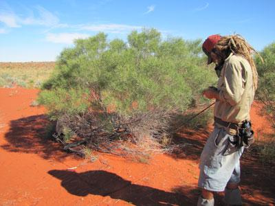 Collecting data on Pijuri plants, 2010.