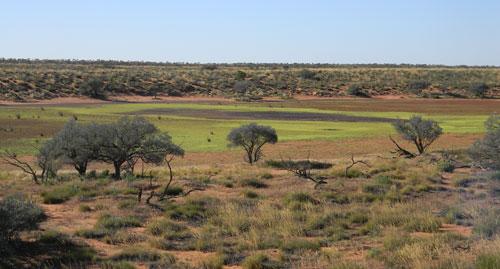 The lush Simpson Desert, Ethabuka Reserve, 2010.