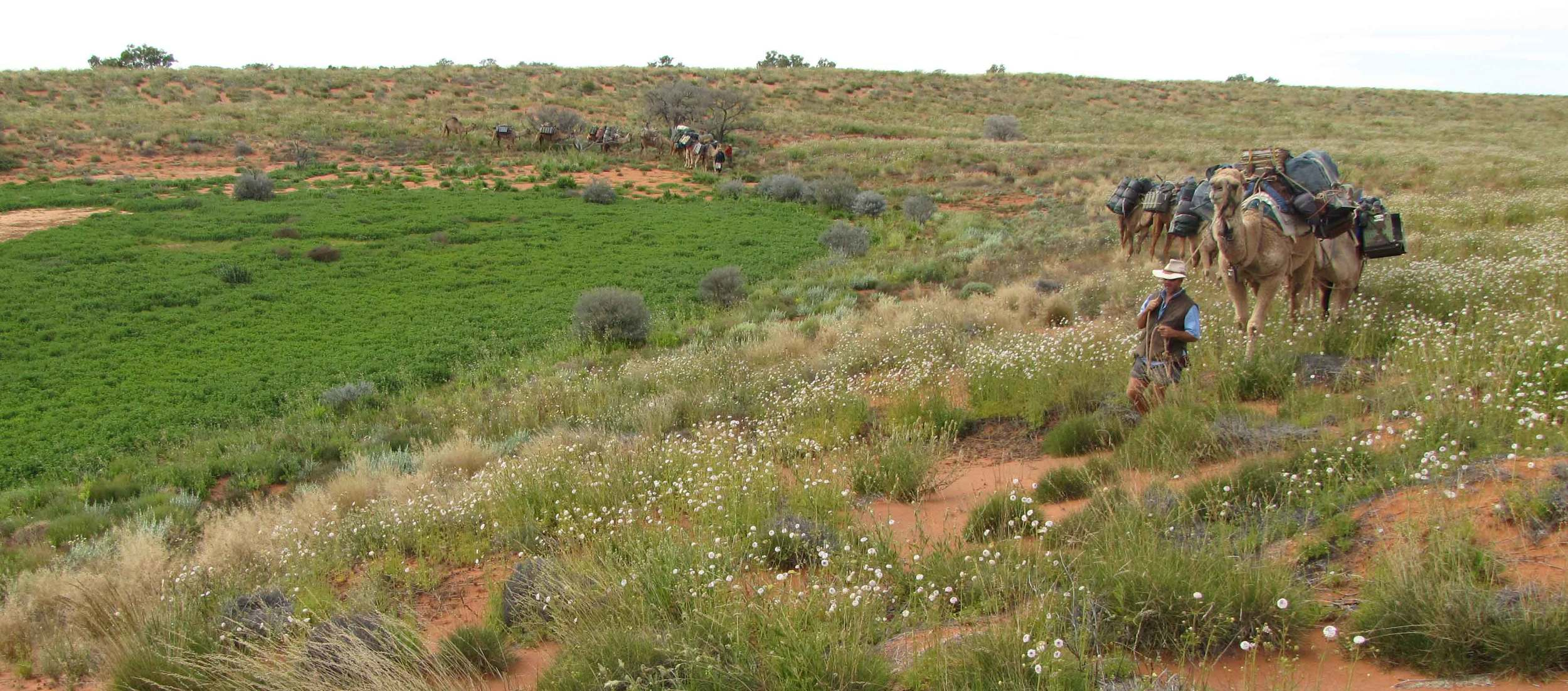 Ethabuka Reserve Surveys, 2010.