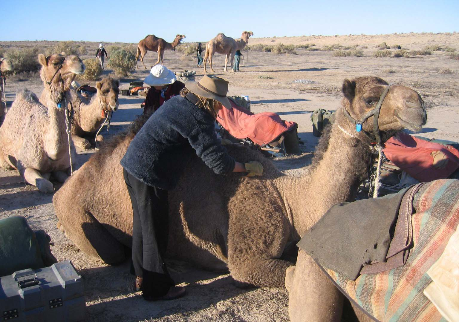 Loading the camels.