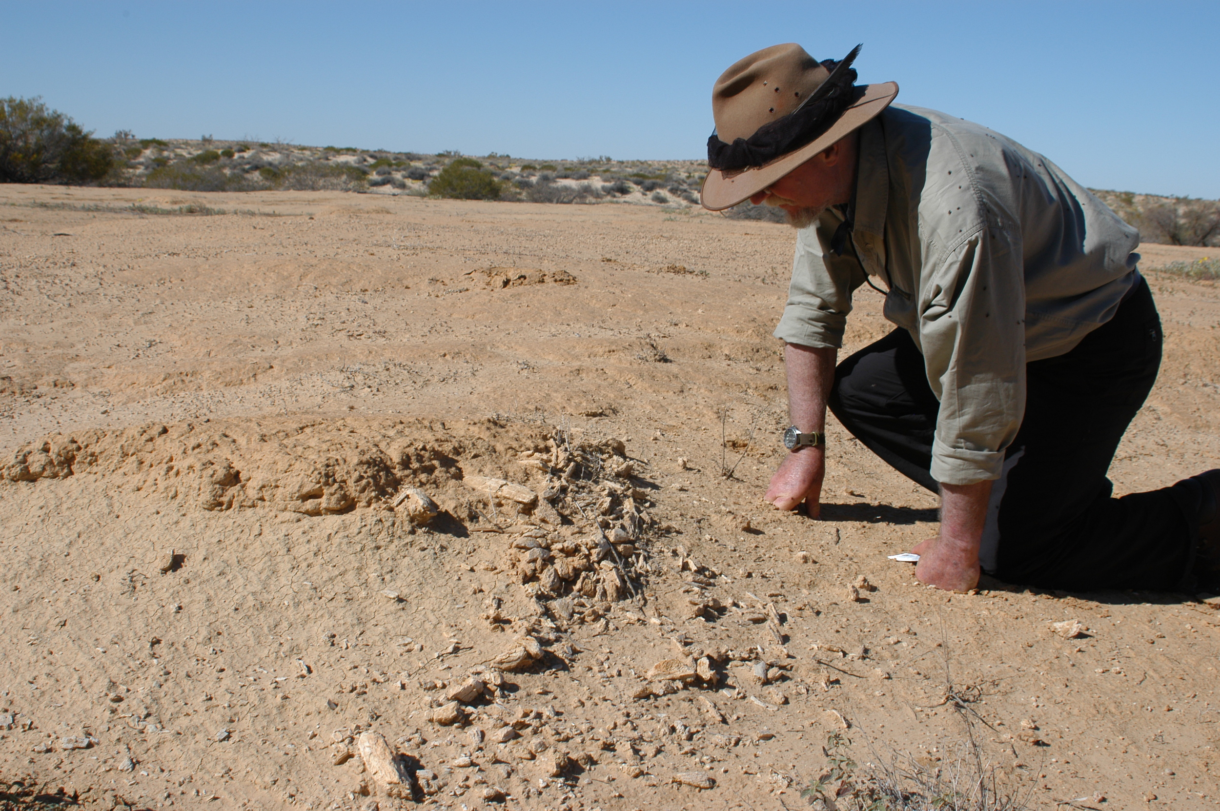 Inspecting another fossil discovery.