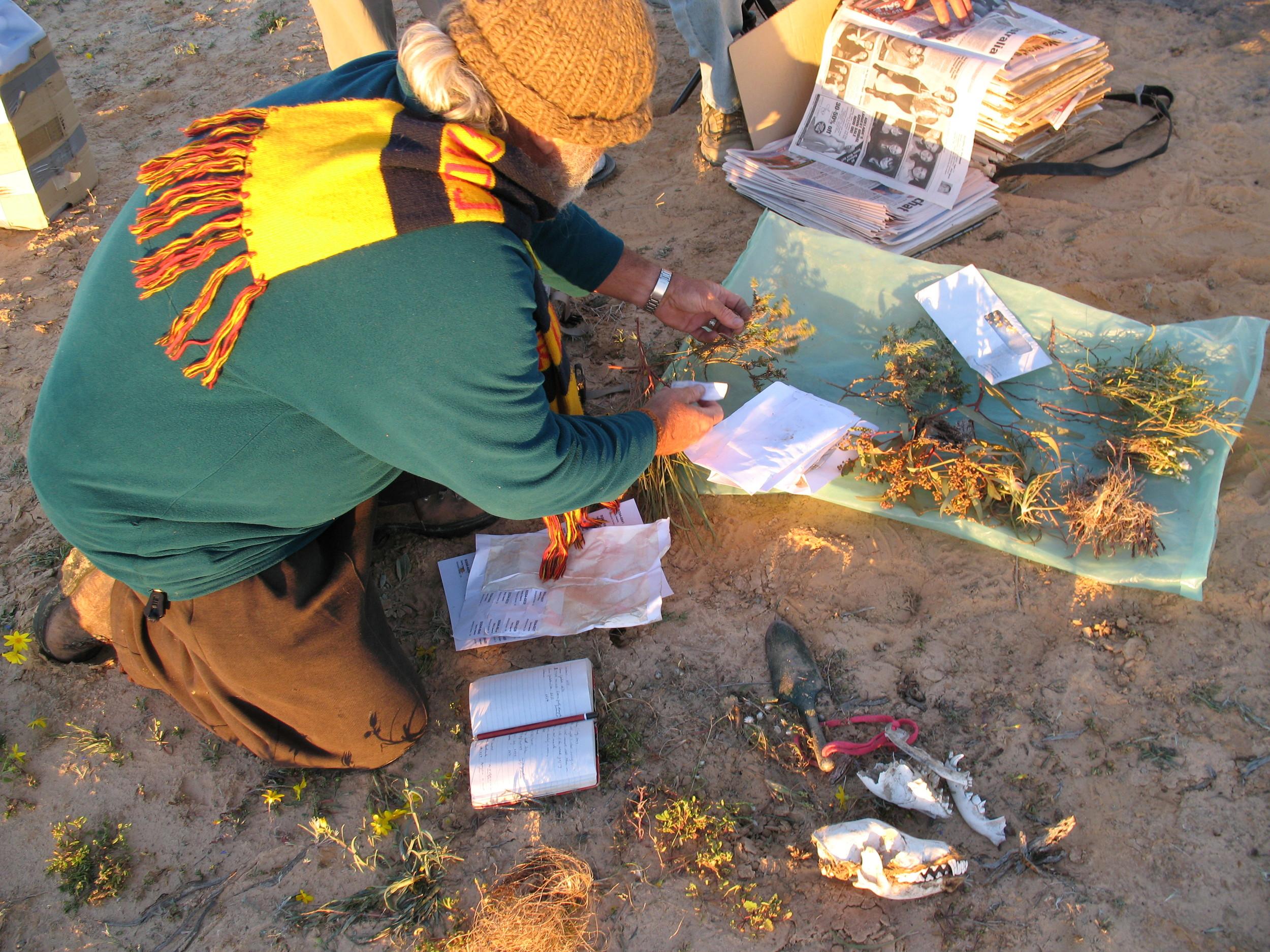 Collecting plant specimens and dingo skulls.